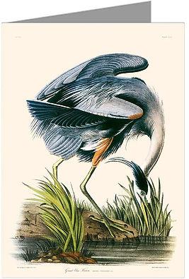 Twelve Note Cards of J.J. Audubon Illustrations Birds of North America