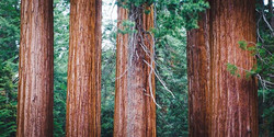 Jour8 - Sequoia Park