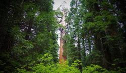 Jour8 - Sequoia Park (General Grant)