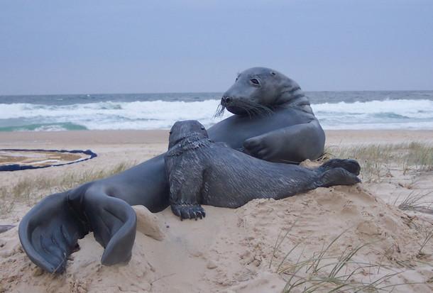 haggerty_ian_seal_and_pup_onbeach (002).