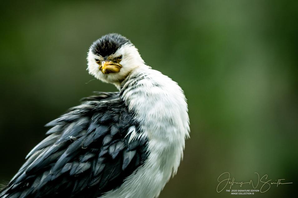 Great shots wildlife photography