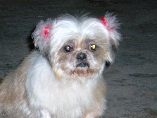 Hope aka Lucy-Fur