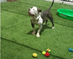 Tiny Says Throw the Ball