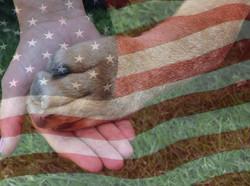 PTSD Service Dog Program 4 R Heroes