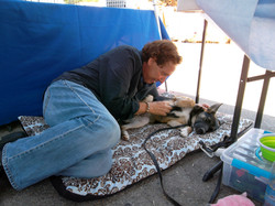 Warren and a shep pup