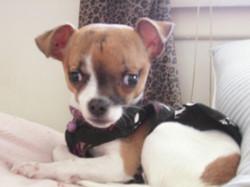 Punkie Pup 2011