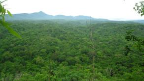 Estrategias de restauración en una selva tropical caducifolia