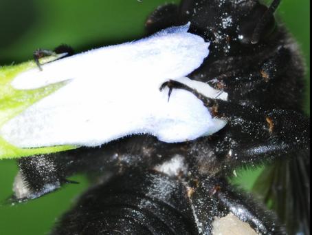 De bichos y flores: polinizadores  irremplazables