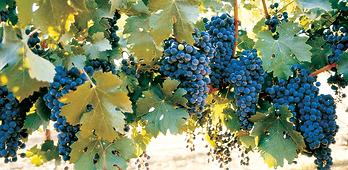 Yatir-Wines-4.png