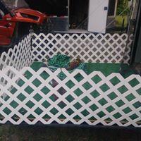 dog fence.jpg