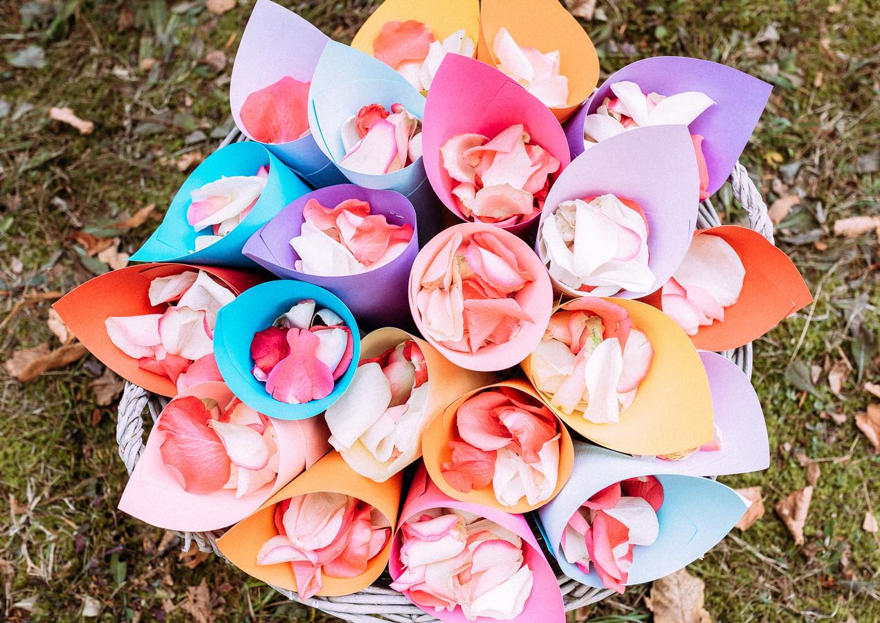 Pétales de roses - Rose petals