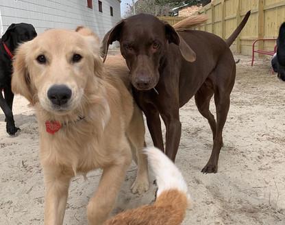 Bark VB Doggie Daycare