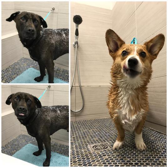 Bark Bath 3.jpg