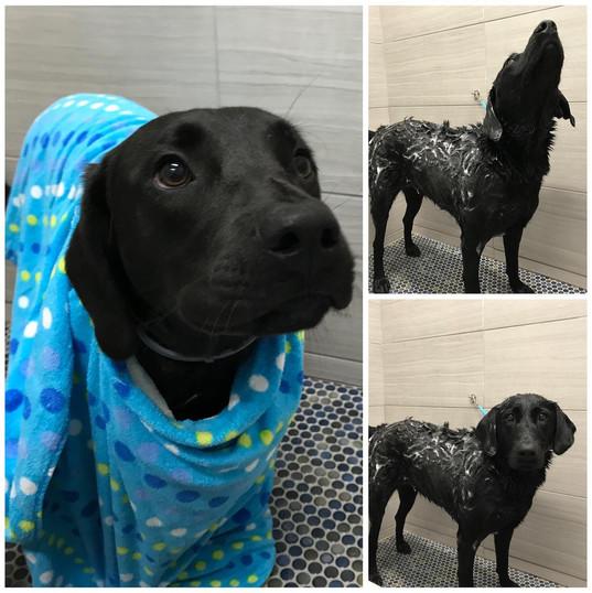 Bark Bath.jpg