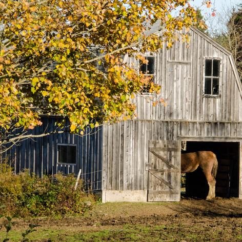 Bum in Barn