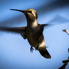 Hummingbird Up Close