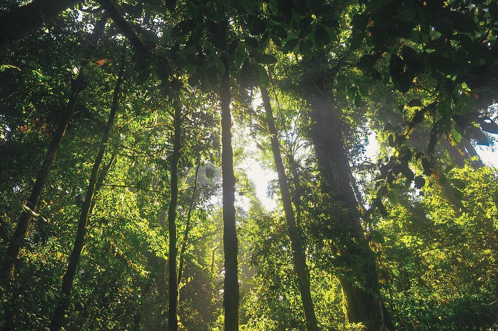 forest-jungle-leaves-6507.jpg