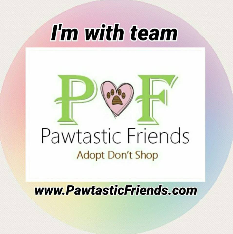 A Pawtastic Journey
