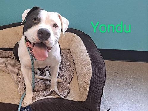 Yondu