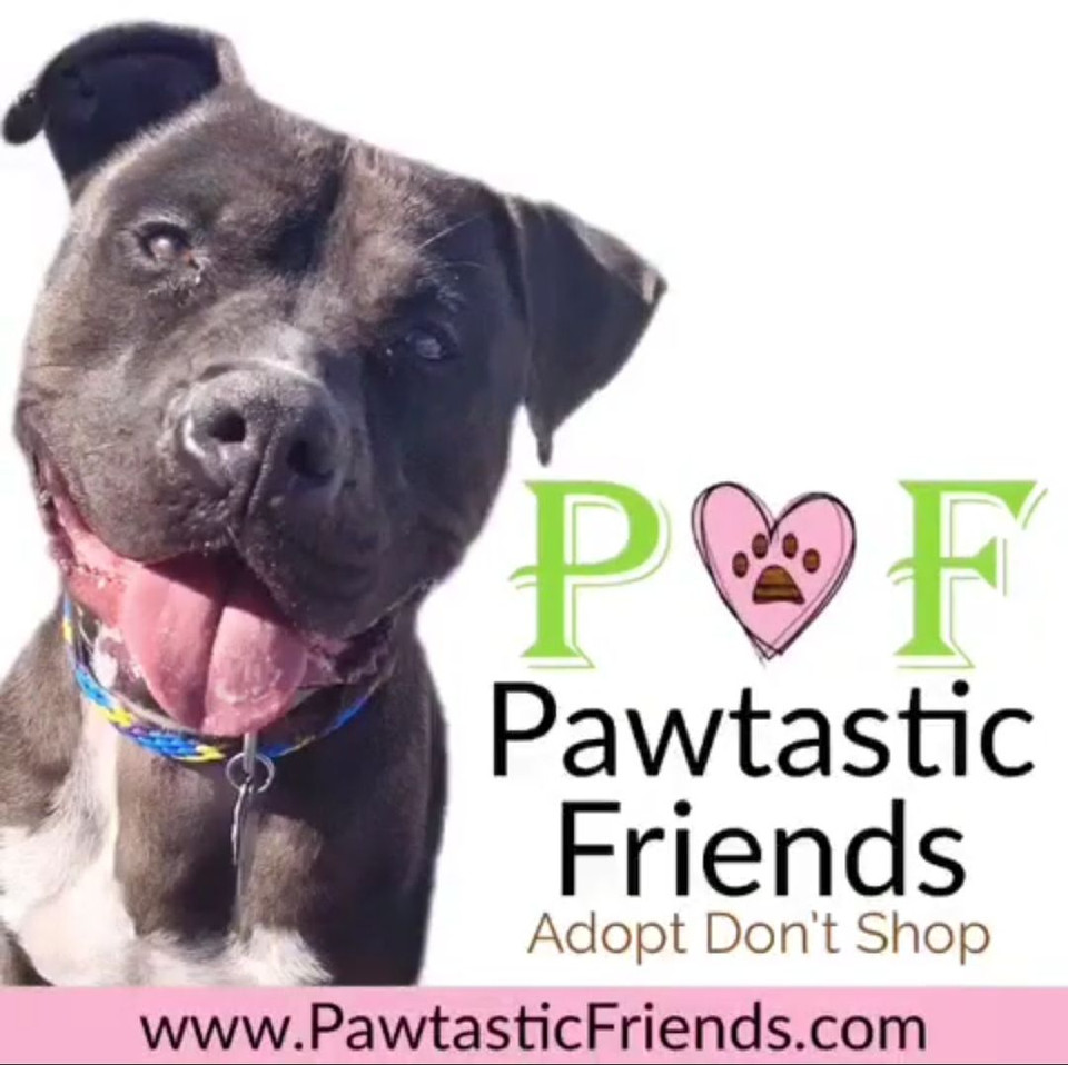 Pawtastic Friends Block Party