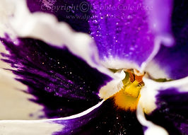 South Carolina Watercolor Artist and Photographer Debbie Cole Pace