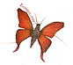 Papillon de conte