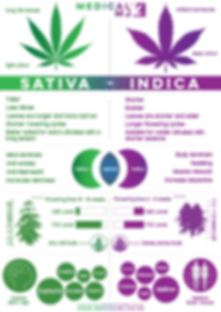 Sativa_vs_Indiuca.png