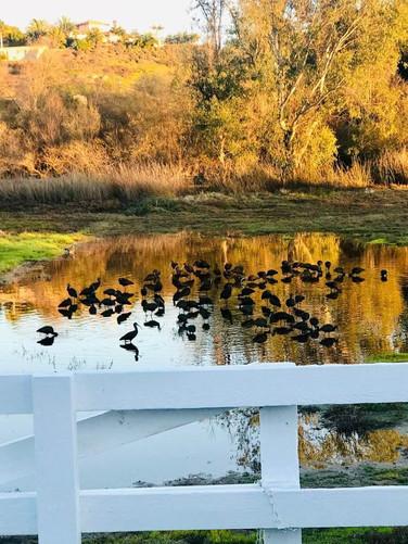 AdAstra Facility Ducks.jpg