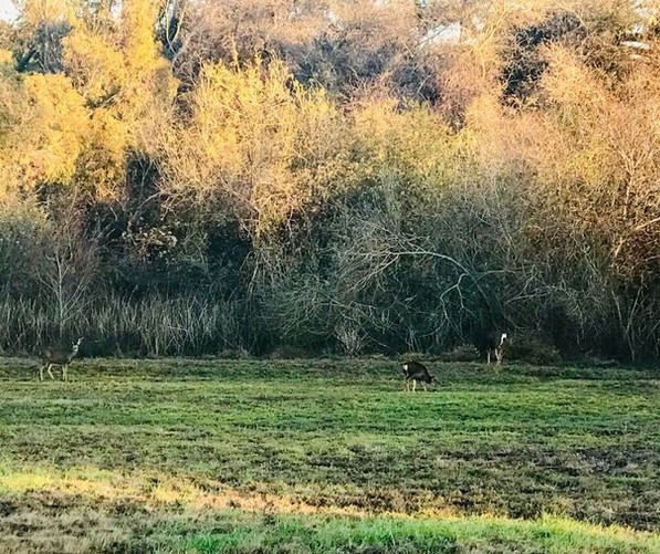 Ad Astra Facilit Deer.jpg