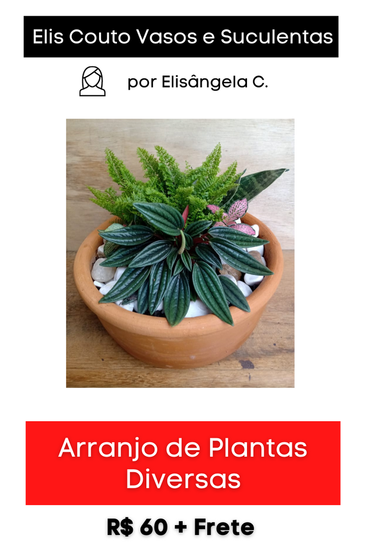 Arranjo de Plantas Diversas