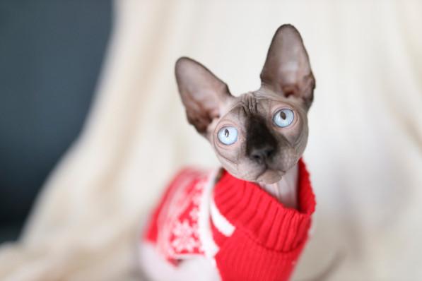 Cat Boss_0551.jpg