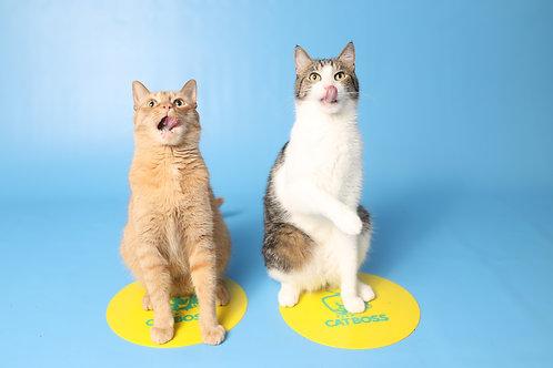 Cat Training Mark