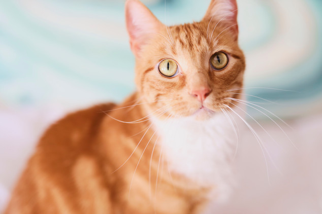 Cat Boss_0622.jpg
