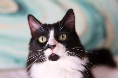 Cat Boss_0648.jpg