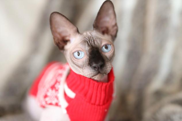 Cat Boss_0594.jpg