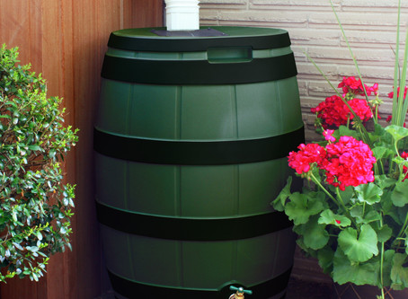 Rain Barrels : Taking the Plunge