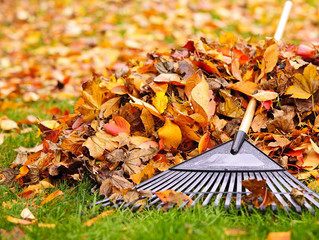 Fall Cleanups : Give Your Lawn a Head Start for the Spring