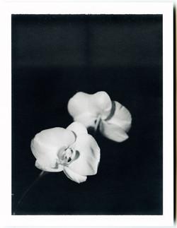 Polaroid color comp III