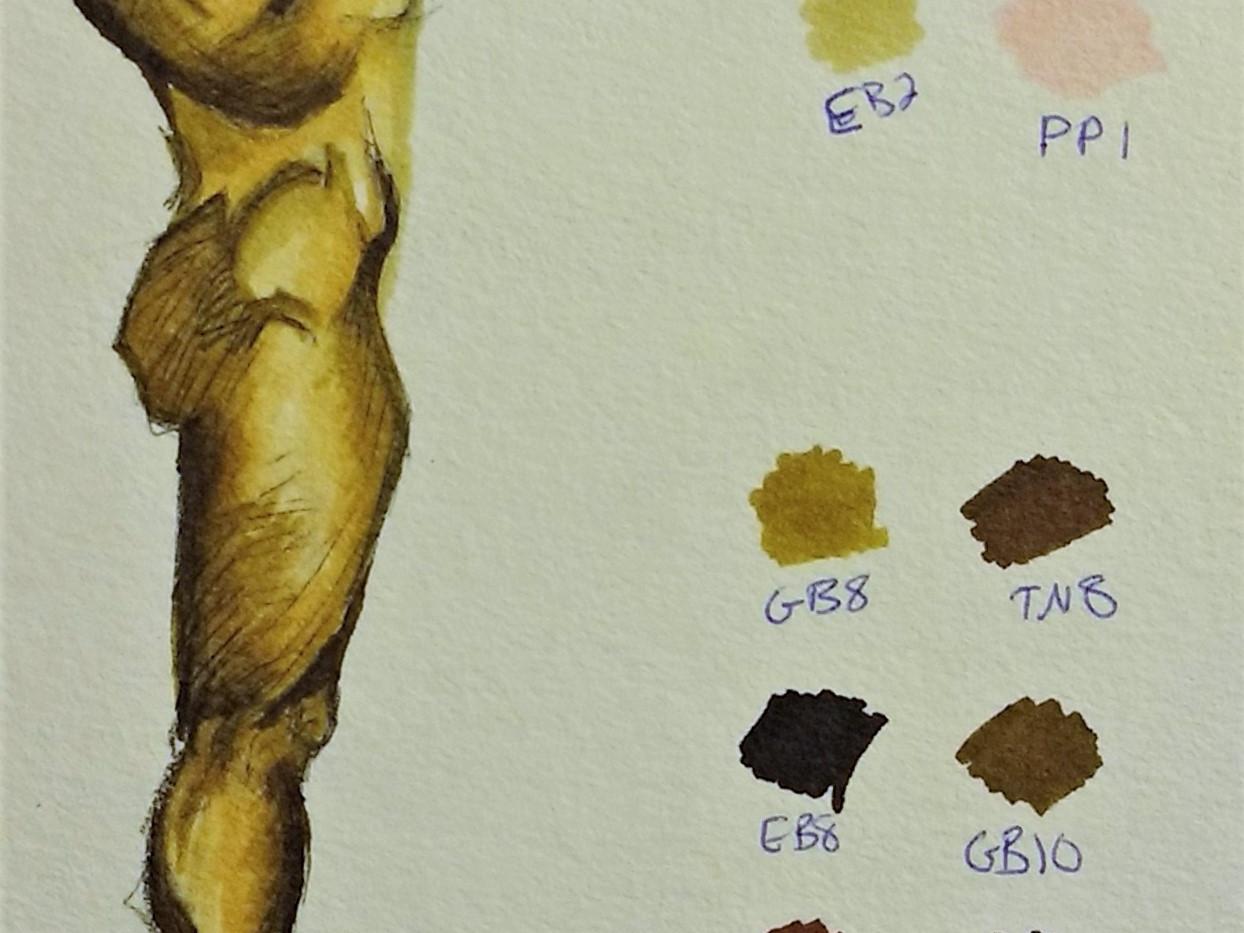 Skin Tone Marker Study