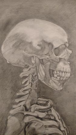Skeletal Study Detail 2