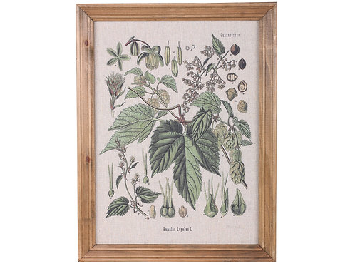 Sweet Little Wood Framed Botanical Print, interiors by Chic Antique for sale at Source for the Goose, Devon