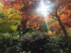jardin-secret-de-londres-5.jpg