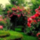 jardin s.jpg