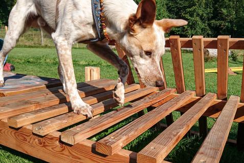 Hundeschule-Wolfspfote-48.jpg