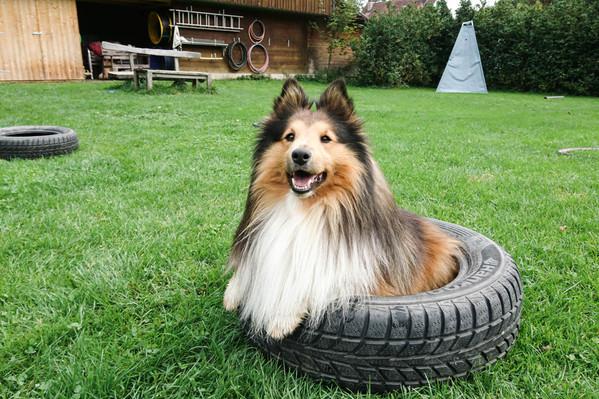 Hundeschule-Wolfspfote-54.jpg
