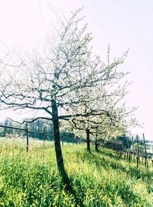 haueters-edle-destillate-v6-16.jpg