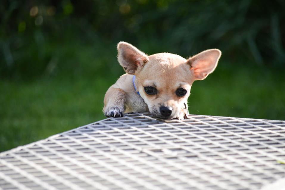 Hundeschule-Wolfspfote-13.jpg