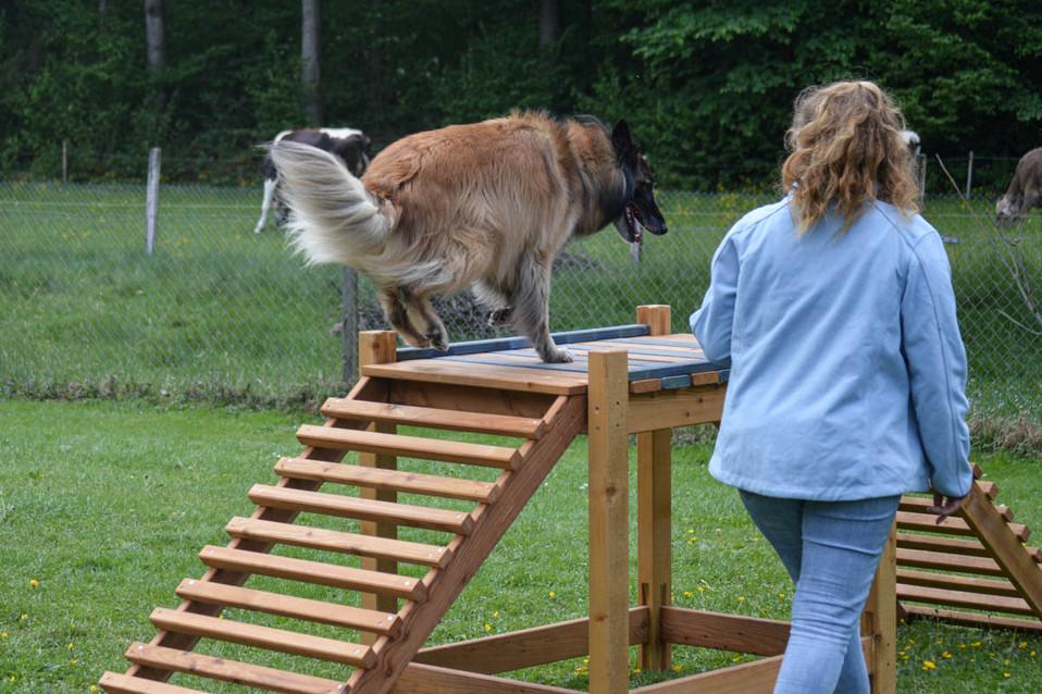Hundeschule-Wolfspfote-35.jpg
