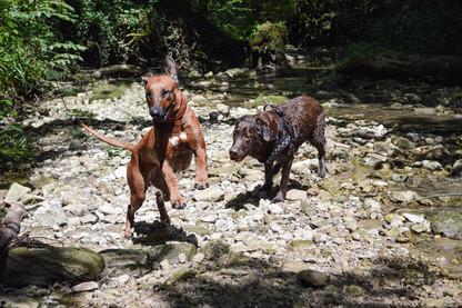 Hundeschule-Wolfspfote-30.jpg