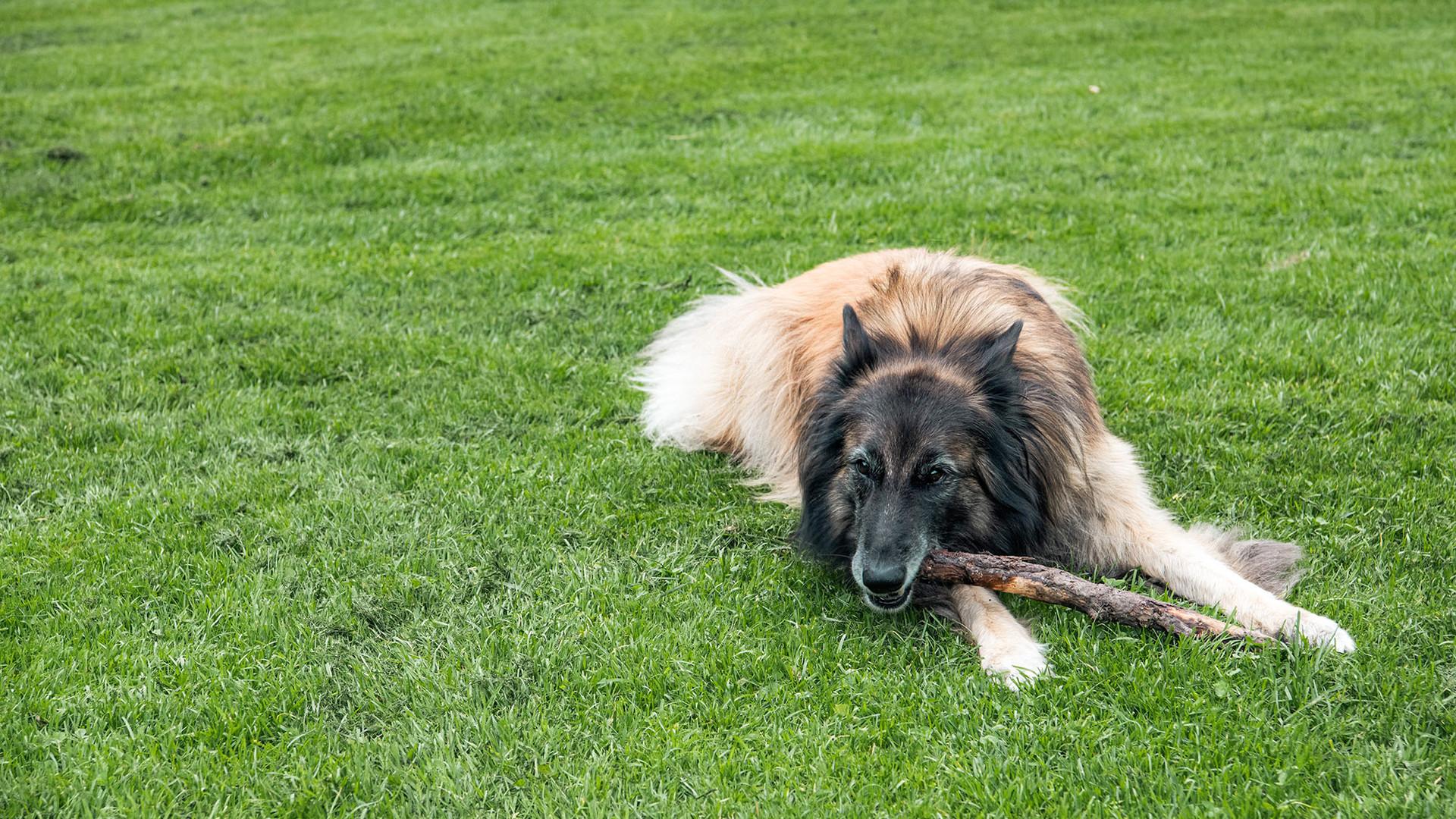 Hundeschule-Wolfspfote-3